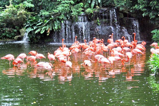 Wildlife Habitat at the Flamingo
